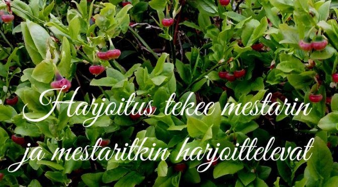 Kuvassa mustikan kukkia ja teksti Harjoitus tekee mestarin
