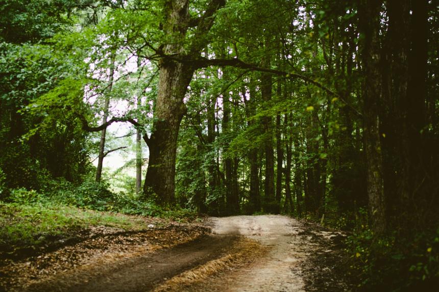 Kuvassa tie metsän keskellä. Kuva: Sonja Langford / Unsplash