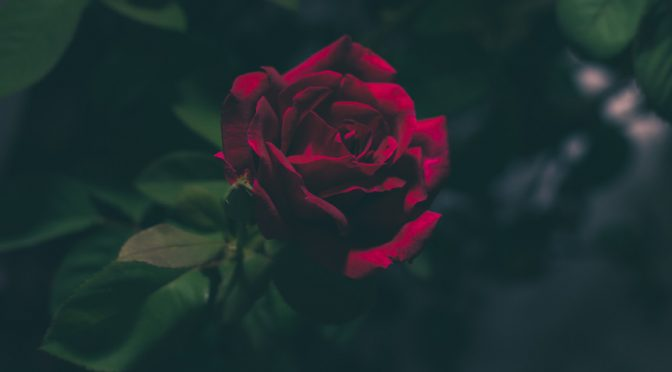 Photo by Jez Timms on Unsplash